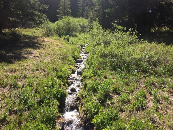 Native Lake Hike Stream